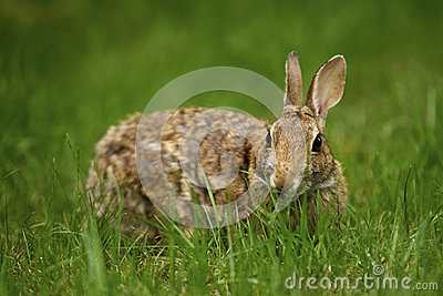 Rabbit in the Grass 4