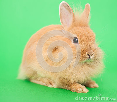 Rabbit on Green