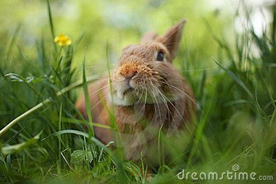 Rabbit in green grass