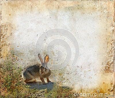 Rabbit on a Grunge Background