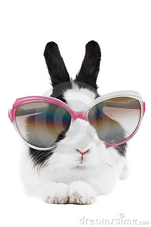Free Rabbit In Sunglasses Isolated Stock Images - 13472934