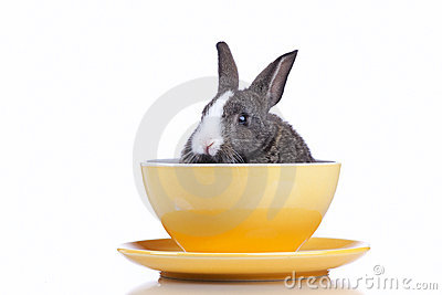 Rabbit inside a bowl
