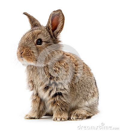Free Rabbit Isolated On A White Background Royalty Free Stock Photos - 32906228
