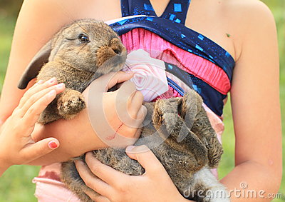 Rabbit in kids hands