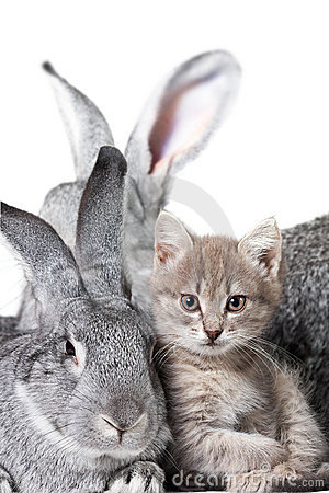 Rabbit and kitten