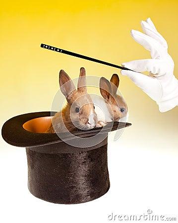 Rabbit magic trick in top hat