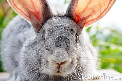 Rabbit muzzle