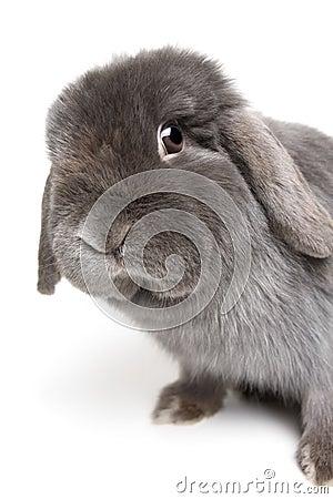 Free Rabbit On White Stock Photo - 2084440