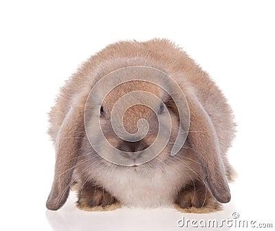 Rabbit pets