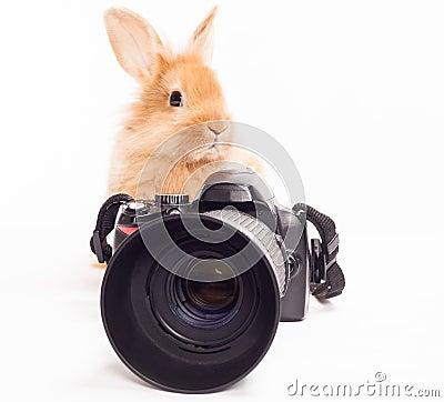 Free Rabbit Photographer. Stock Photos - 32317333