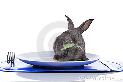 Rabbit in a plate
