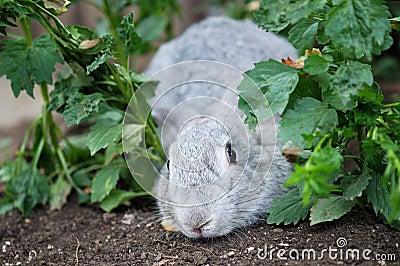Rabbit play hide-and-seek