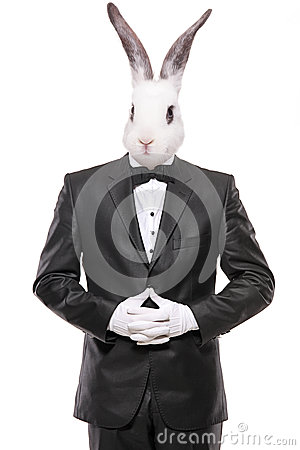 Rabbit posing in a bow tie suit