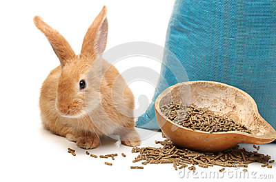 Rabbit and rabbit feed