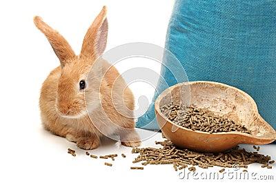 Rabbit and rabbit feed