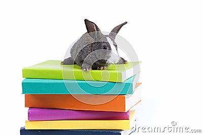 Rabbit reading books