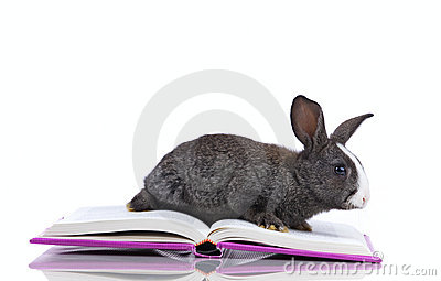 Rabbit reading books