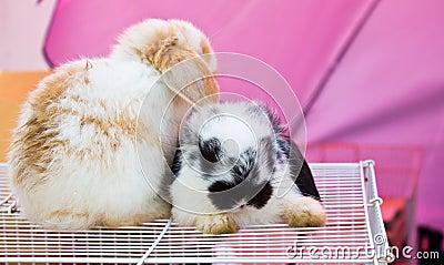 Rabbit sitting on cage