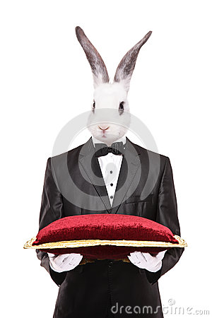 Rabbit in a suit holding a red velvet pillow