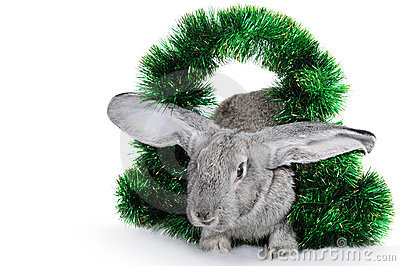 Rabbit - a symbol of 2011