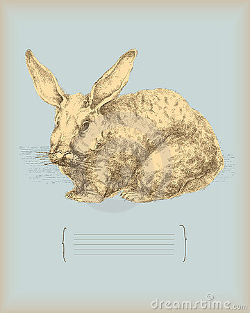 Rabbit- vintage drawing