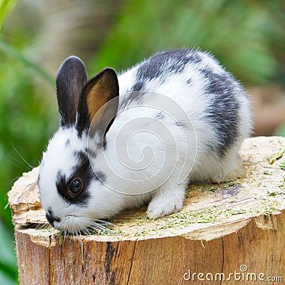 Rabbit on the wood