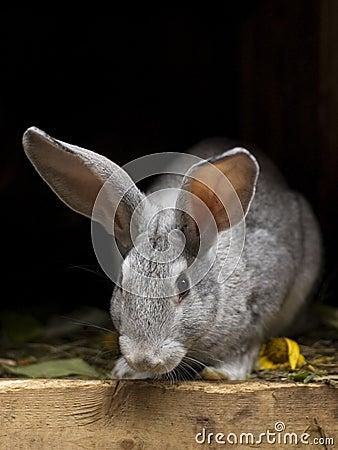 Rabbit in wooden hutch