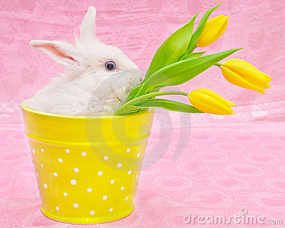 Rabbit And Yellow Tulips Royalty Free Stock Photography - Image: 17904817