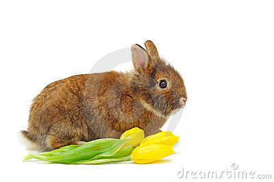 Rabbit With Yellow Tulips Stock Images - Image: 18780934