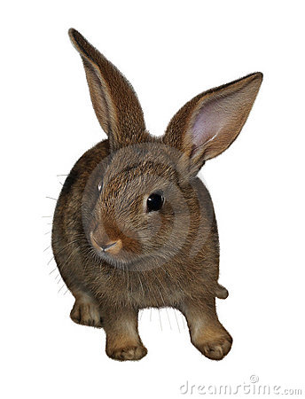 Free Rabbit1 Stock Photos - 1669393