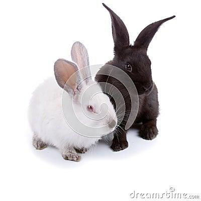 Free Rabbits Royalty Free Stock Photography - 19738967