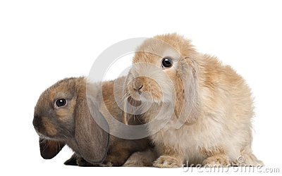 Rabbits against white background