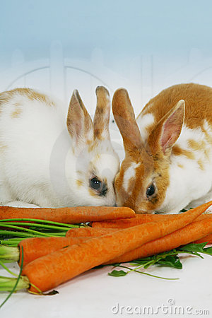 Stock Photo: Rabbits eating carrots