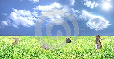 Rabbits on a glade