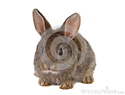 Rabbits isolated