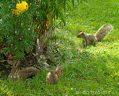 Rabbits and squirrel