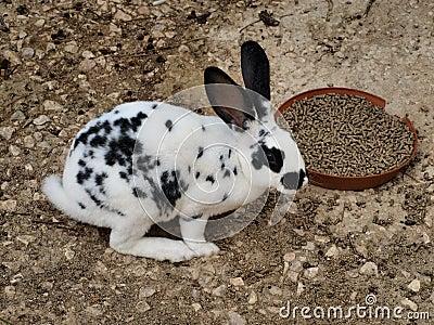 Rabbitspots.