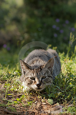 Free Rabies Stray Cat Royalty Free Stock Images - 19793619