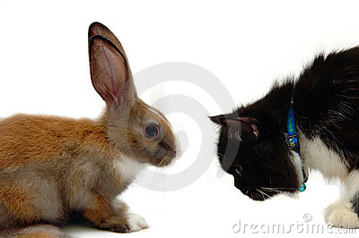Rabit Vs cat