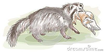 Raccoon dog with a bird.
