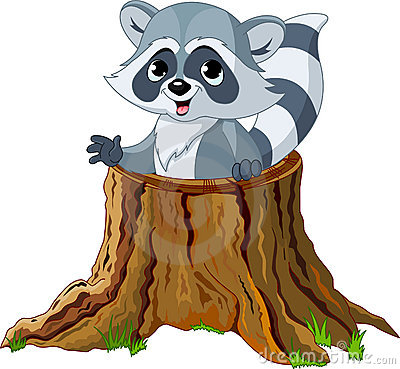 Free Raccoon In Tree Stump Royalty Free Stock Photos - 19750078