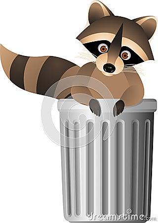 Raccoon inside garbage can