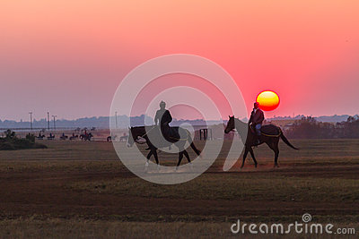 Race Horses Grooms Jockeys Training Dawn Editorial Photography