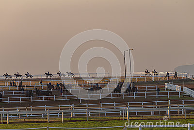 Race Horses Training Dawn Editorial Stock Photo