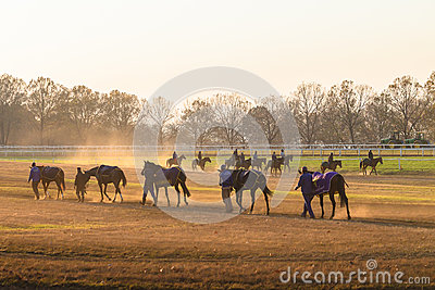 Race Horses Training Dawn Editorial Photo