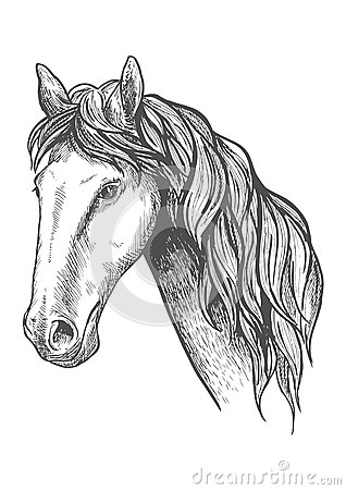 Free Racehorse Of Appaloosa Breed Sketch Symbol Stock Photos - 73833403