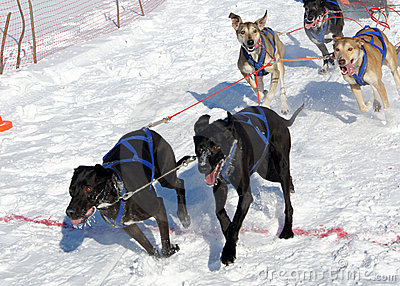 Races on the dog