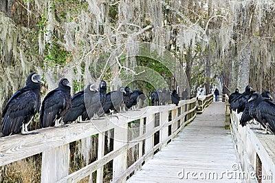 Racketeers. Black vultures.