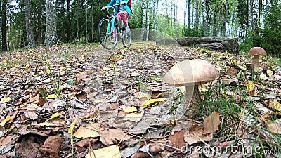 Radfahrer und Pilze im finnischen Herbst stock video