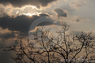 Radiant sun, heavy clouds, tree silhouette